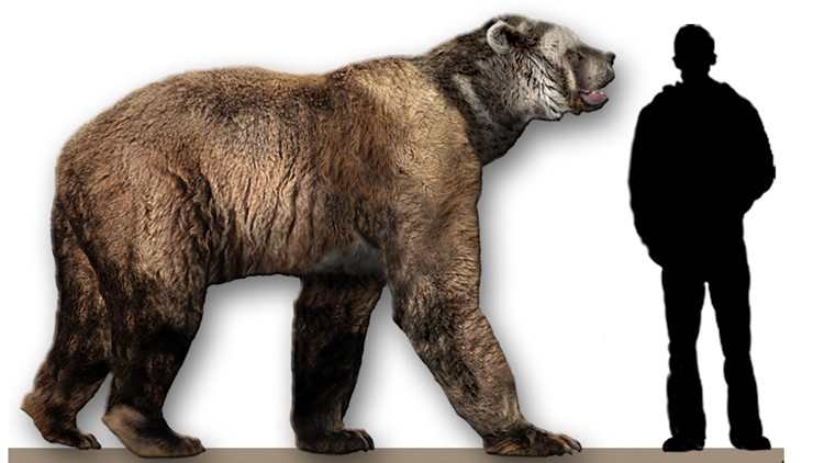 Biggest Bear Ever Stood 11 Feet Tall Upright, Could Run 40 Mph