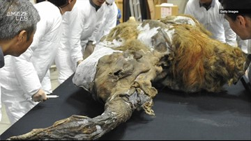 Scientists Have Been Able to Wake Up Ancient Woolly Mammoth Cells