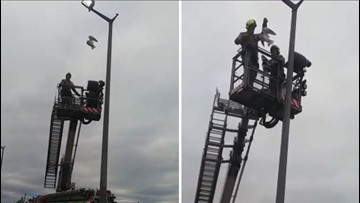 Fire & Rescue Crews Use Cherry Picker To Save Bird Tied To Top Of Lamppost