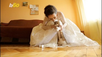 How To Help Your Pet Be Part of Your Wedding Party