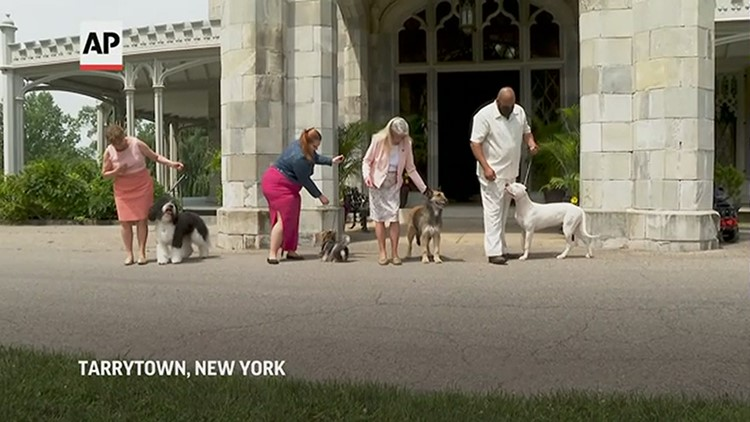 New breeds vie for Best In Show at Westminster dog show