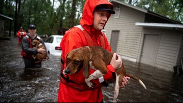 Saving pets without a permit: Good Samaritan arrested after helping animals survive Florence