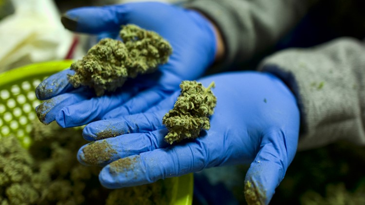 US awards $3M to fill gaps in medical marijuana research
