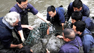 Sven Explains: Only known female Yangtze turtle dies