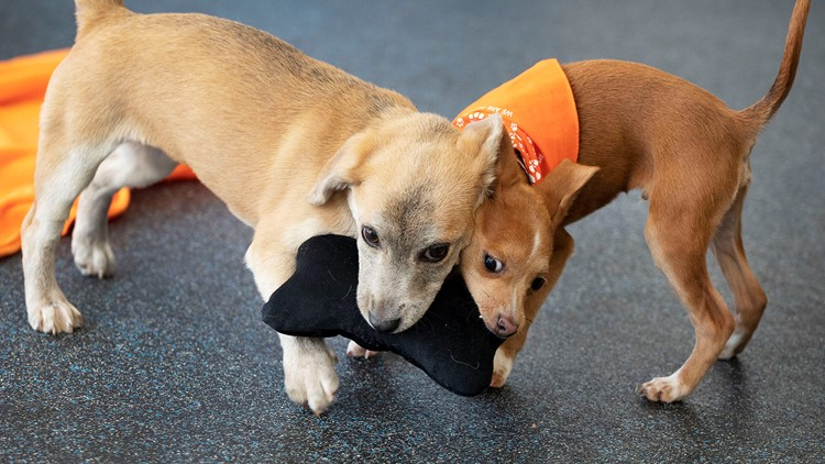ASPCA Dog Transfer