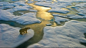 Arctic's 'unparalleled' warmth brings region into 'uncharted territory'