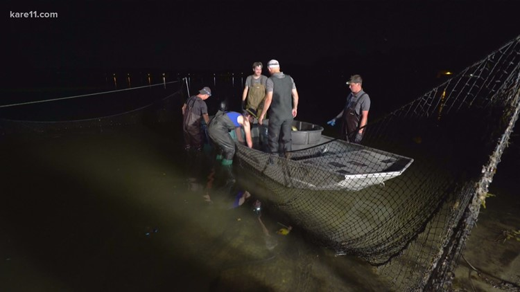 Invasive carp removal is a thing and the video is really cool