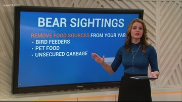 Digital Dive: What to do if you spot a bear