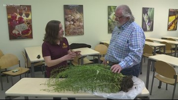 Grow with KARE: Winter camelina