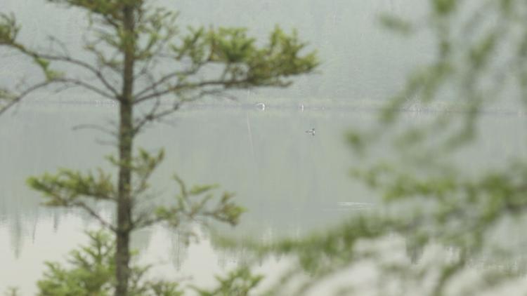Hitting The Trails: Lake Bemidji State Park