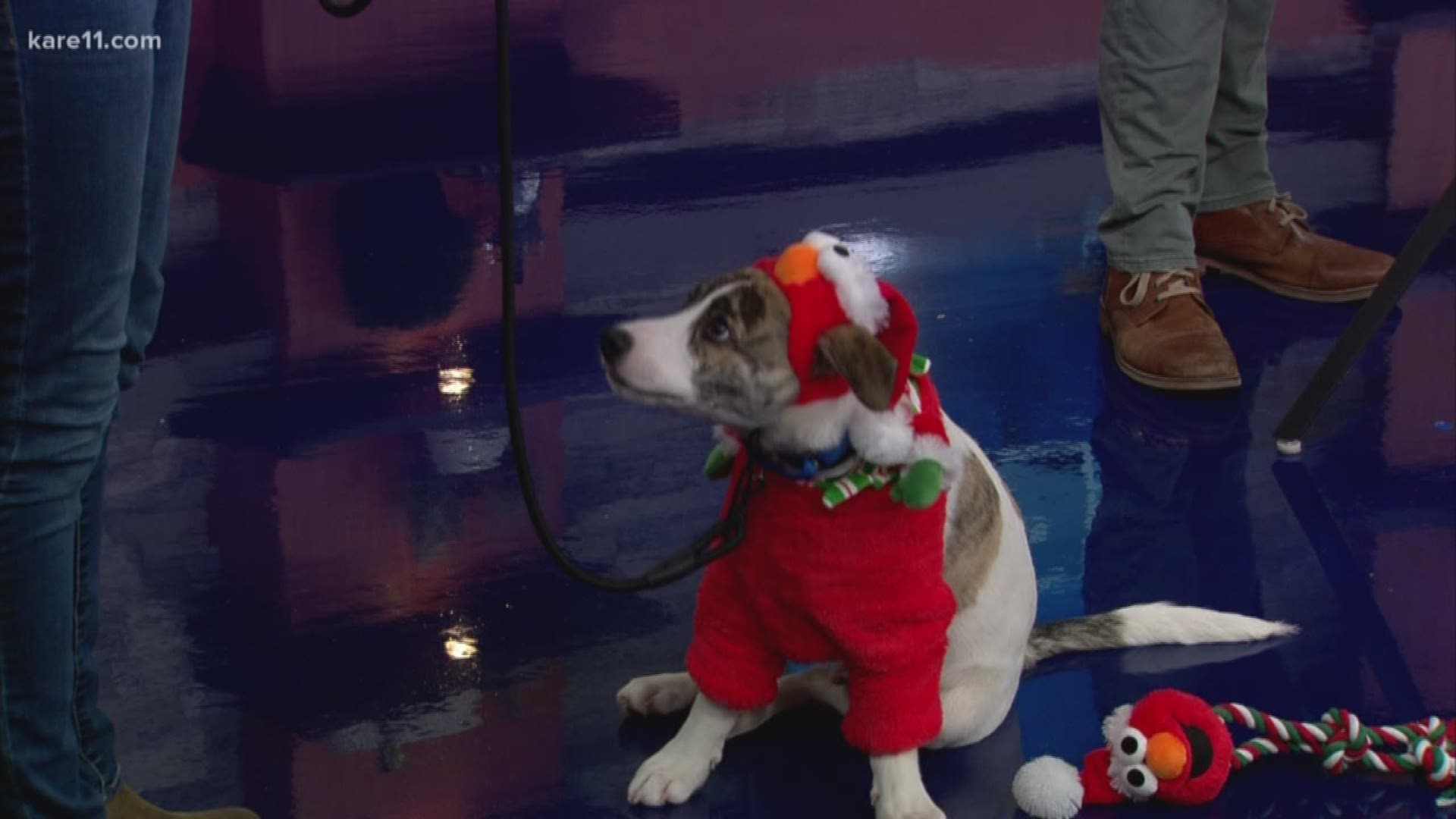 Calming Dog Biscuit Also Helps Animal Humane Society Kare11 Com