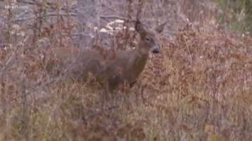Wildlife experts gather in Wisconsin to discuss CWD