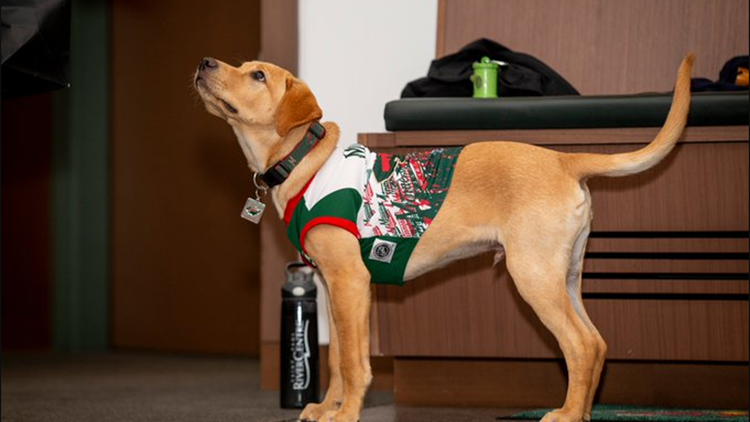 Welcome to the team! Minnesota Wild adopt rescue puppy