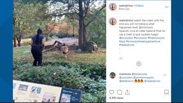 Woman appears to dance, taunt lion in its enclosure at the Bronx Zoo