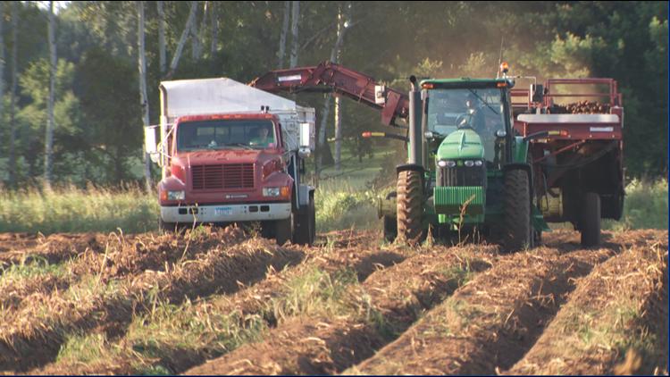 Mark Edling drives the John Deere tractor pulling the potato harvester.
