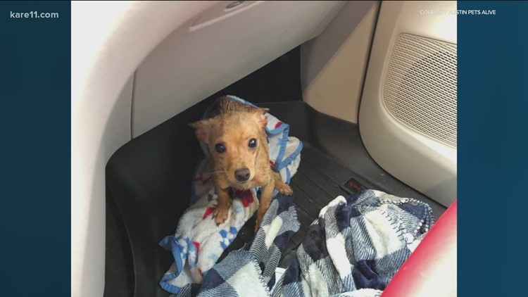 Twin Cities nonprofit Ruff Start Rescue aids Texas dogs