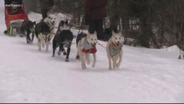 Sled dog race coming to Gunflint Trail