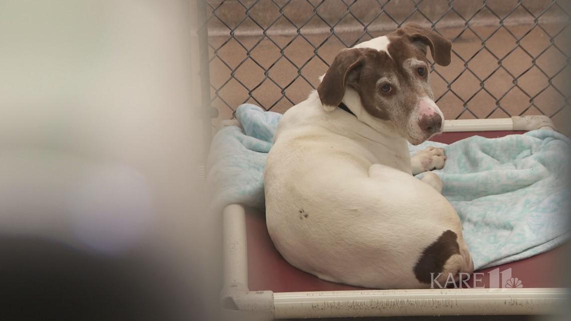 Minnesota Animal Humane Societies ask community for donated items