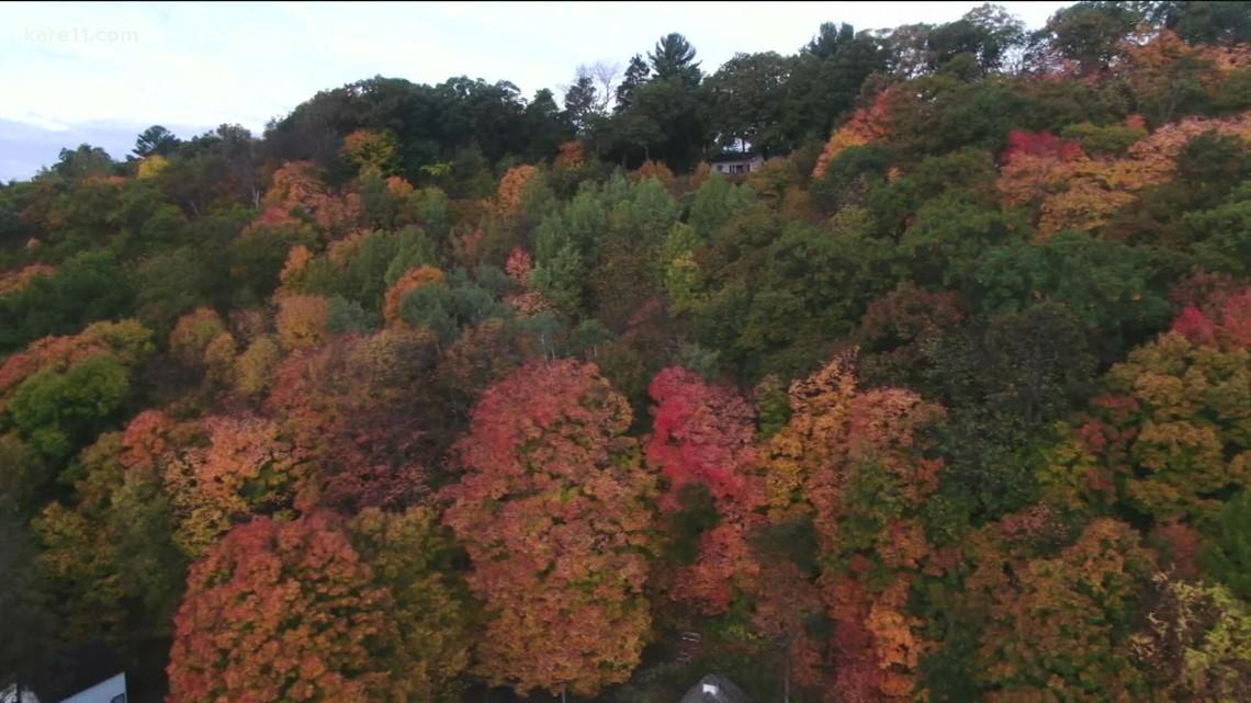 Fall leaf peepin' in Wisconsin
