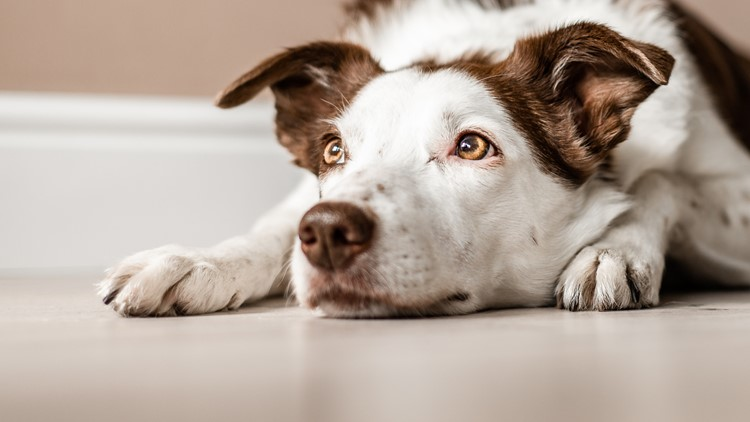 Tips for keeping your pets entertained indoors