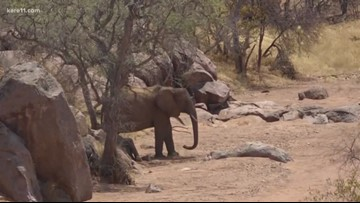 Explore with Sven: Tracking elephants in Namibia
