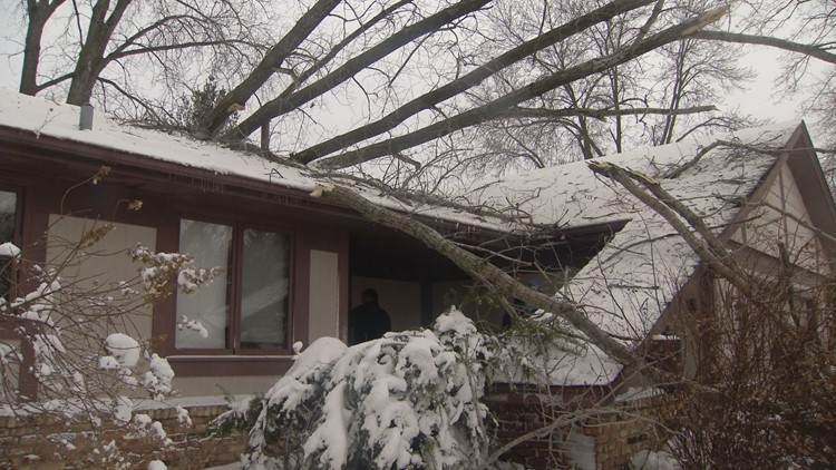 Tree in Fridley home