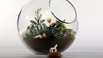 Grow with KARE: Terrariums 101