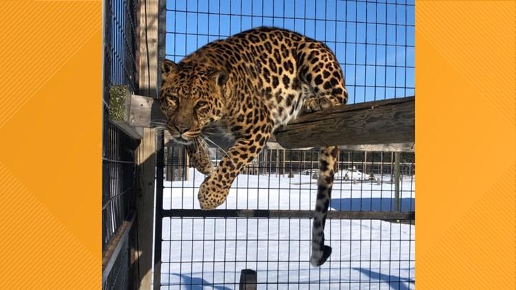 What's new at Safari North Wildlife Park