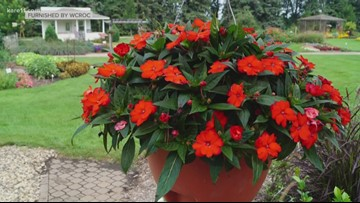 Grow with KARE: Top Ten Annuals