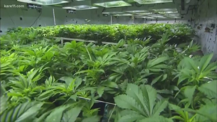 VERIFY:  Are kids using marijuana more now that it's legal in 10 states?