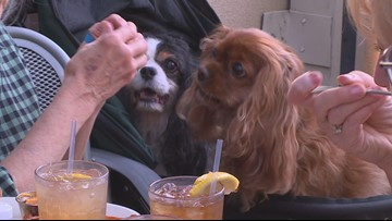 Twin Cities' dog-friendly trend gets mixed reviews