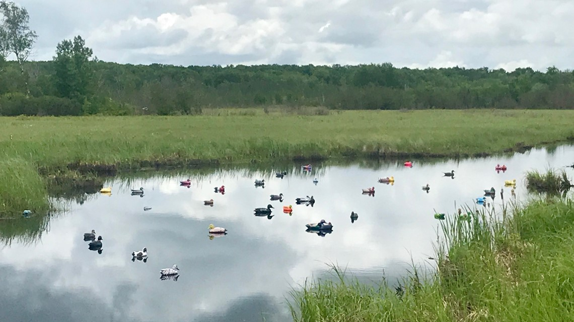 Ditch Ducks become a Highway 65 phenomenon