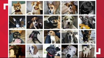 Local dog rescue celebrates adoption milestone
