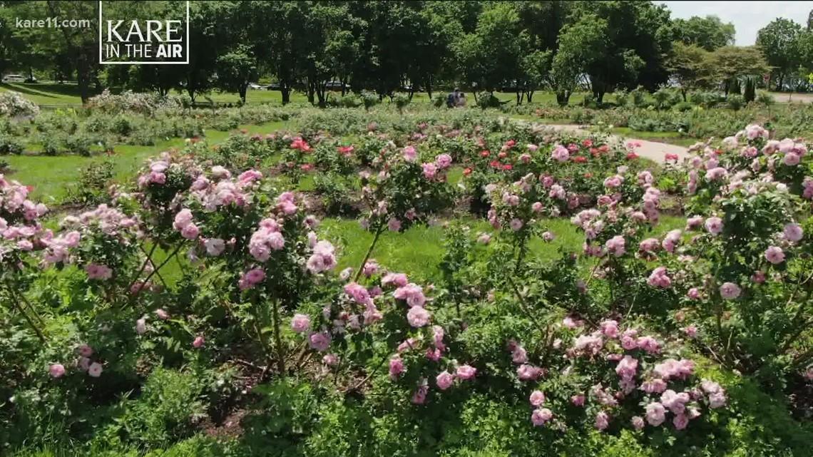KARE in the Air: Lyndale Park Rose Garden
