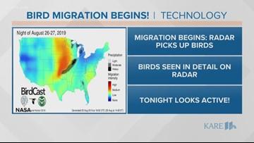 Sven Explains: Forecasting bird migration