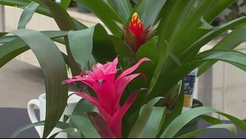 Grow with KARE: Bromeliads our plant of the month