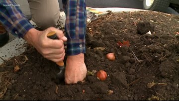 Grow with KARE: Plant your spring bulbs!