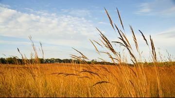 Grow with KARE: All about grasses