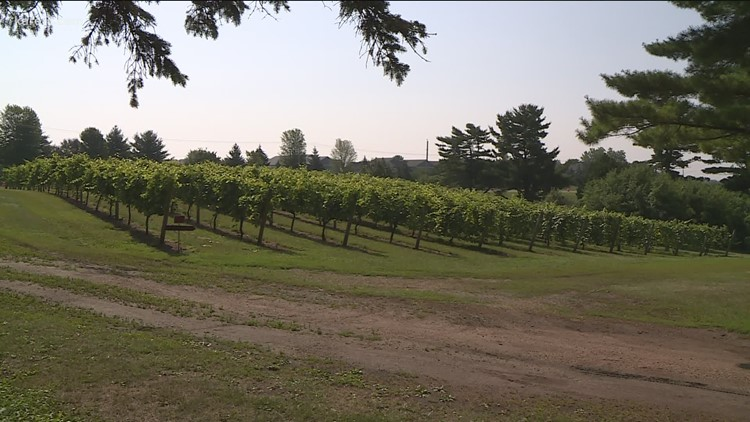 One Minnesota vineyard thriving in the dry weather