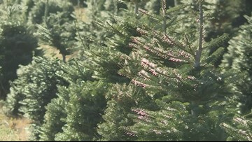 Grow with KARE: Christmas trees
