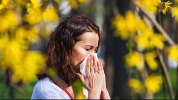 Spring Allergy Survival 101