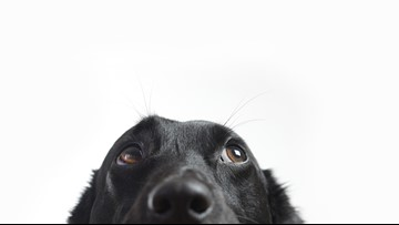 The scoop on pet insurance