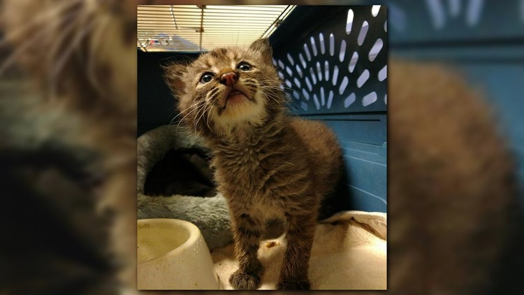 The Wildlife Rehabilitation Center of Minnesota posted to Facebook Tuesday night a photo of what appeared to be a kitten.