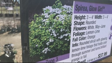 Grow With KARE: Guide to spring trimming