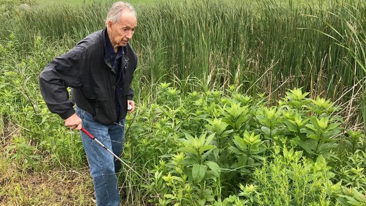 RJ Smith hunts for golf balls