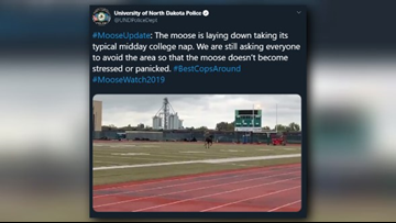 UND Police: Moose taking midday college nap, avoid area