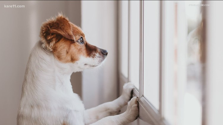 Kozy with KARE: Keeping your pup entertained indoors