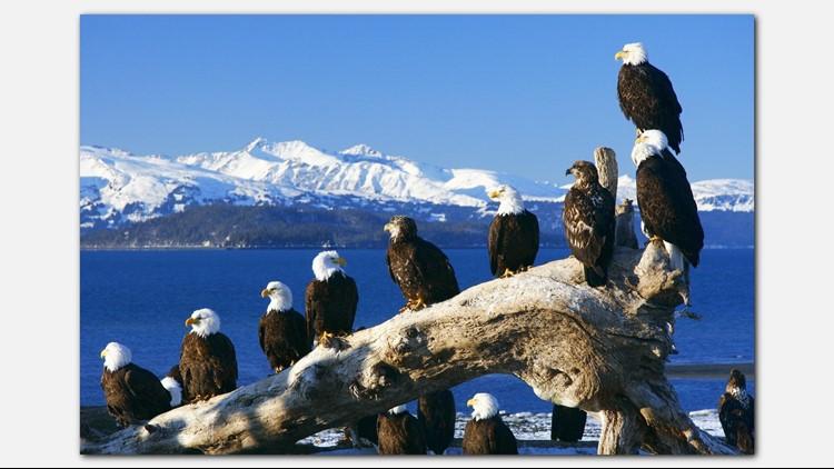 Travis Alasaka Eagles 1280_1533740205395jpgjpg