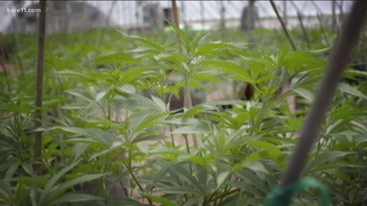 Senate Democrats unveil proposal to end federal prohibition on marijuana