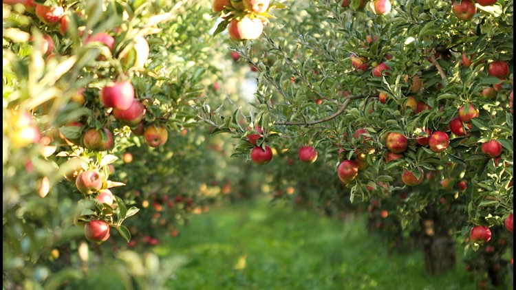 Pine Tree Orchard tops the list of favorite apple orchards. It's the perfect time for a visit to any of the orchards that made the list.